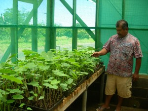 Taro germplasm test in Samoa