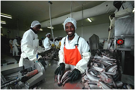 Namibia fish sampling: photo John Cox